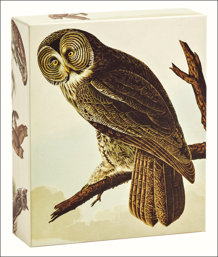 Audubon Owls