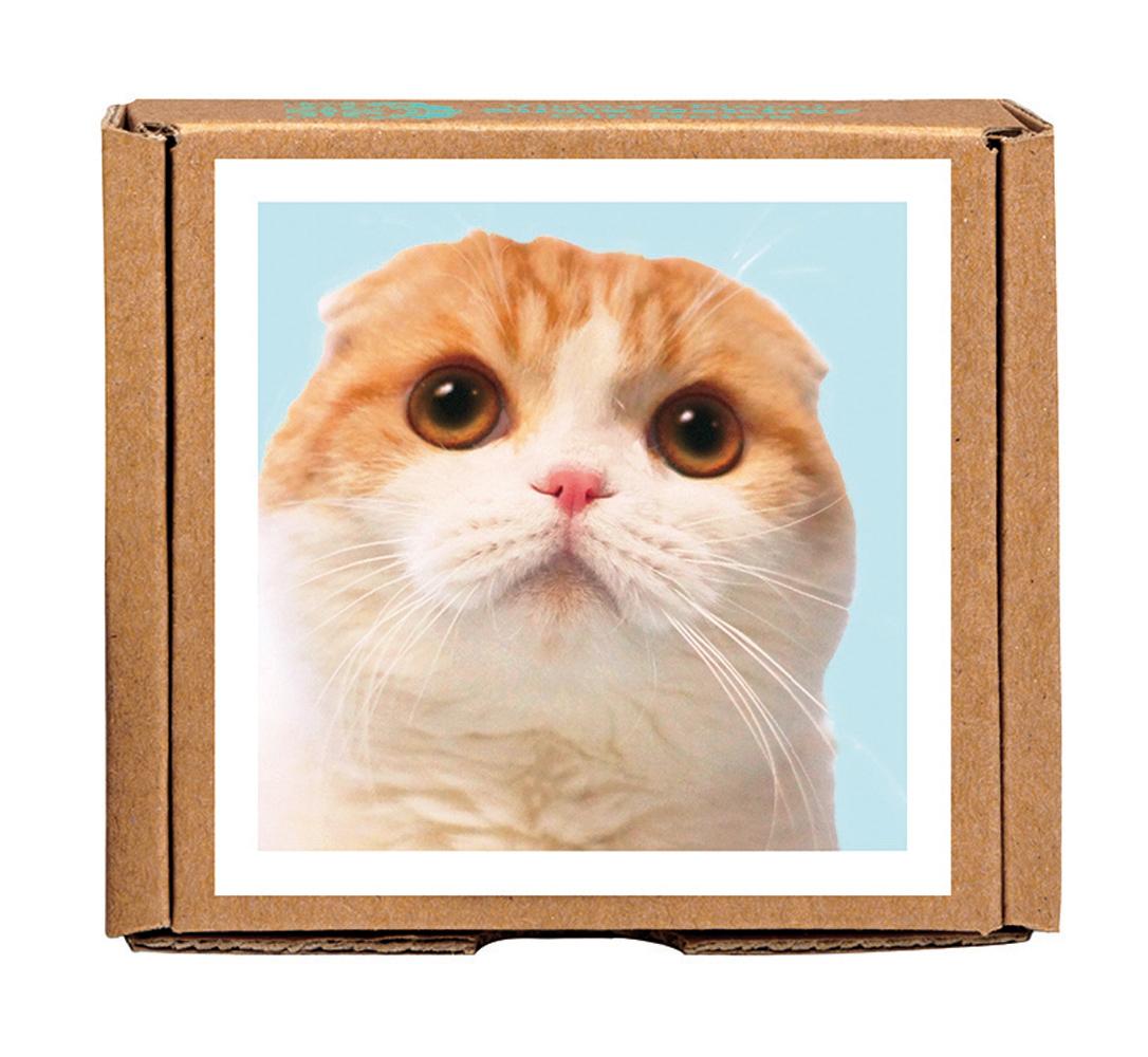 Waffles the Cat GreenGift-Notes