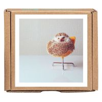 Darcy the Flying Hedgehog GreenGift-Notes