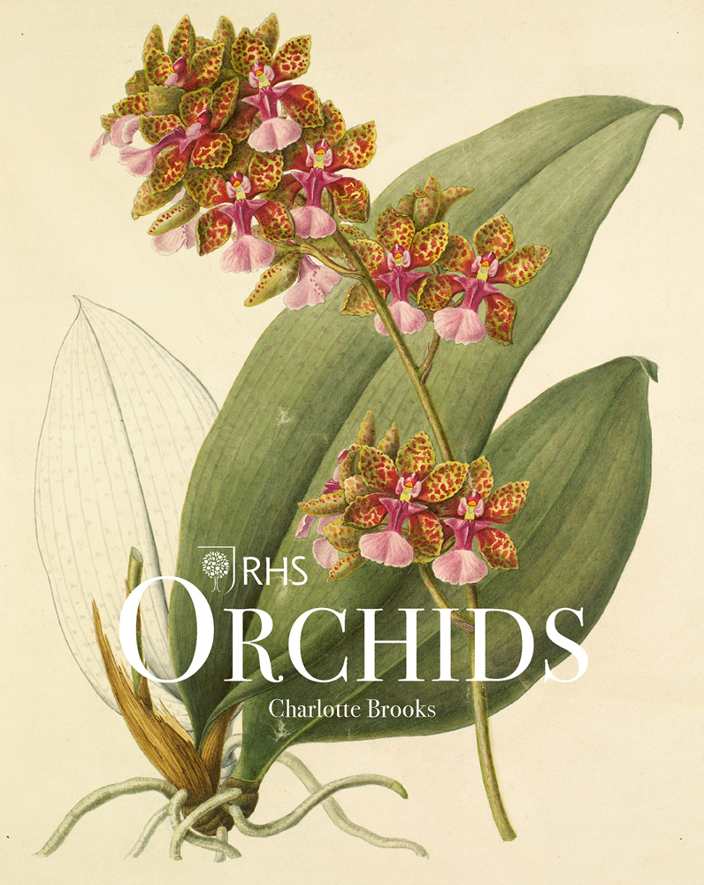 RHS Orchids